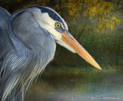 Heron Face Sudy by R christopher Vest