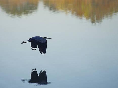 Heron In Flight by Bob Marquis