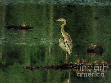 Heron in the green by Rrrose Pix