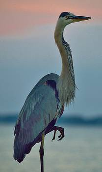 Heron Posing 3 by William Bartholomew