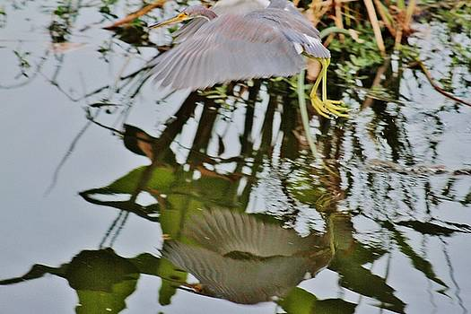 Heron Reflection by Valia Bradshaw