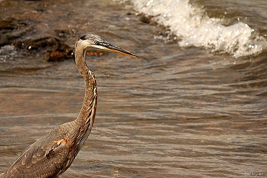 Heron Supper by Greg Simmons