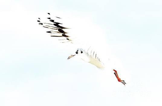 Hi Fly by Gary Bridger