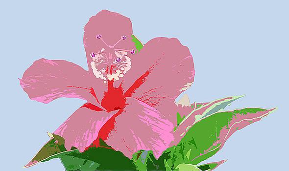 Hibiscus Flower Art - 2 by Karen Nicholson