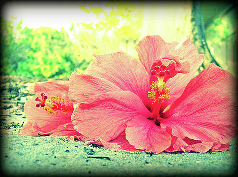 Hibiscus Love by Jessica Palotas