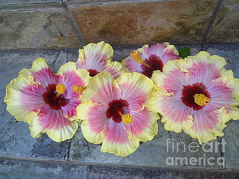 Hibiscus Quints by Jenny Lee