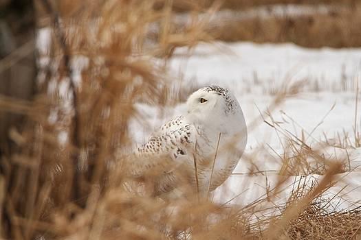 Hidden Snowy Beauty by Teresa McGill