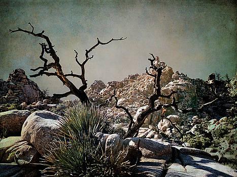 Hidden Valley by Sandra Selle Rodriguez