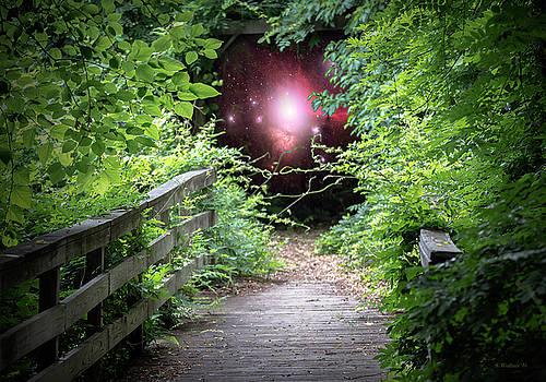 Hidden World by Brian Wallace