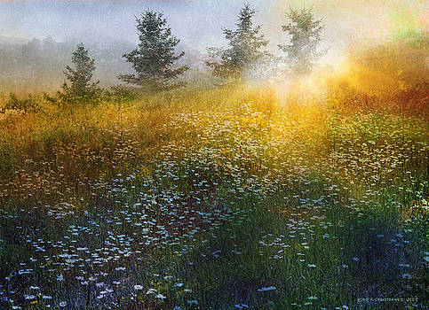 High Country Field Of Daisys by R christopher Vest