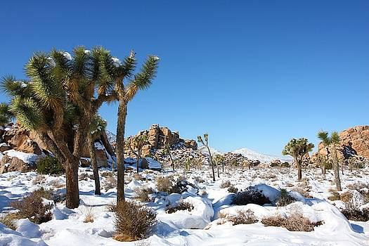 High Desert Magic by David Winge