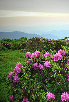 High On The Blue Ridge by Jamie Pattison
