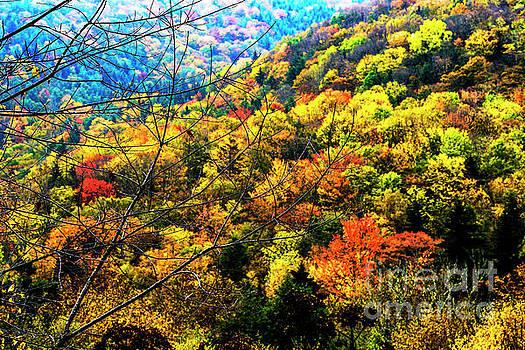 Highland Autumn Rain  by Thomas R Fletcher