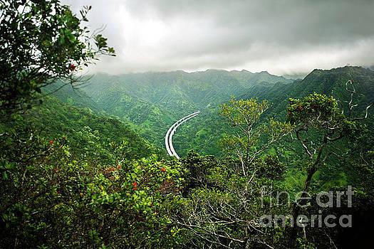 Charmian Vistaunet - Highway through the Jungle