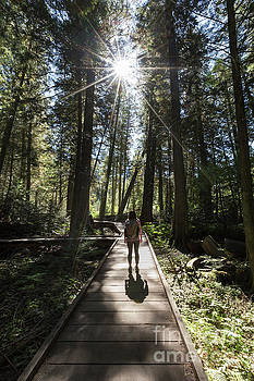 Hiker in Trail of the Cedars Glacier National Park by Brandon Alms