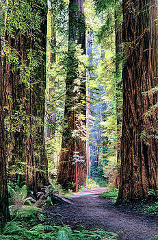 Dan Carmichael - Hiking Through Three Redwood Trees
