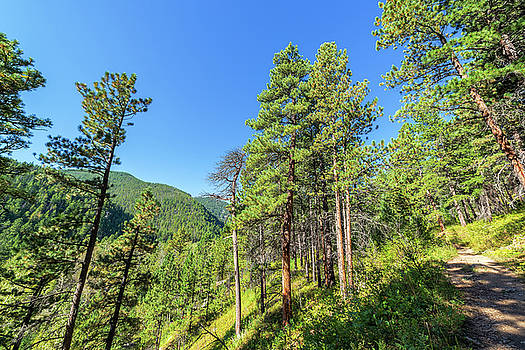 Hiking Trail in Wyoming by Jess Kraft