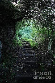 Hiking Trail to Kalaupapa, Molokai by Craig Wood
