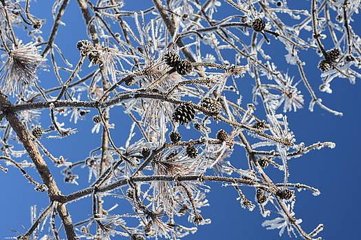 Hoar Frost by Dacia Doroff