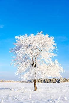 Hoar Frost by Nebojsa Novakovic