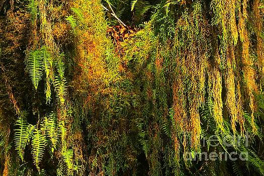Adam Jewell - Hoh Rainforest Hanging Gardens