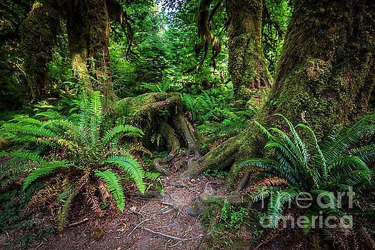 Hoh Rainforest by Joan McCool
