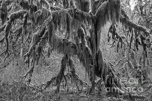 Adam Jewell - Hoh Rainforest Tree Black And White