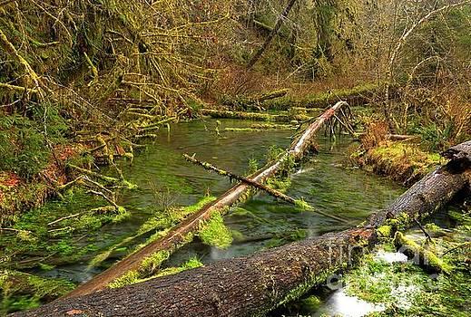 Adam Jewell - Hoh River