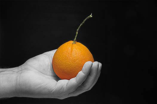 Holding an Orange by Rob Byron