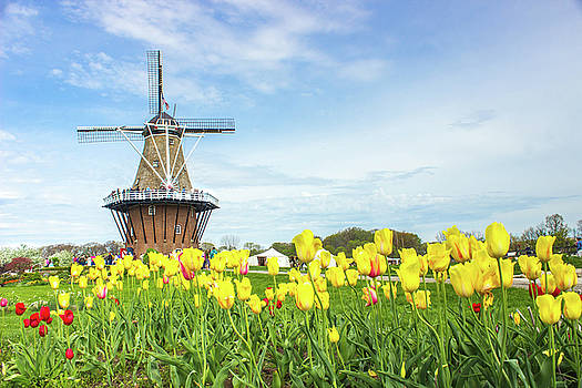 Holland Windmill Proud by Tammy Chesney