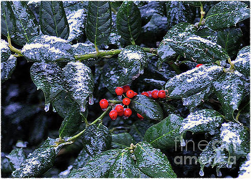 Holly In Winter by Lydia Holly