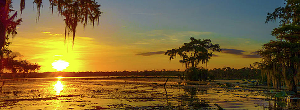 Home Home On the Swamp by Kimo Fernandez
