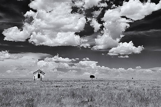 Home on the range by Carolyn Dalessandro