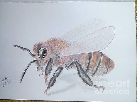 Honey Bee by Vashdev Valasai