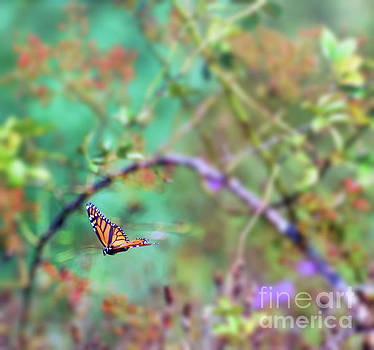 Honey From the Moment - Monarch Butterfly in Flight by Kerri Farley