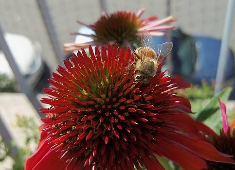 Honeybee-2 by Hatin Josee
