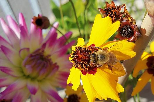 Honeybee by Hatin Josee