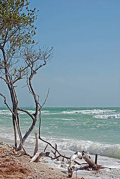 Honeymoon Island Driftwood by Peter  McIntosh