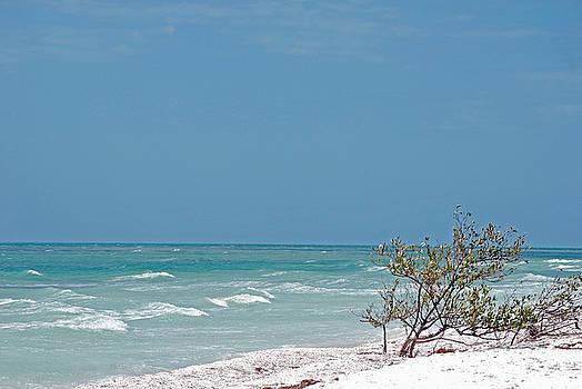 Honeymoon Island Shores by Peter  McIntosh