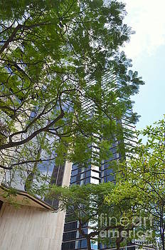 Mary Deal - Honolulu Highrises