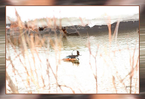 Hooded Merganser Duck in Winter Waters by Gretchen Wrede