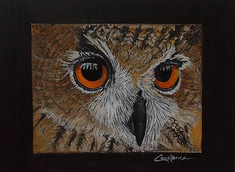 Hoot by Connie Rowsell