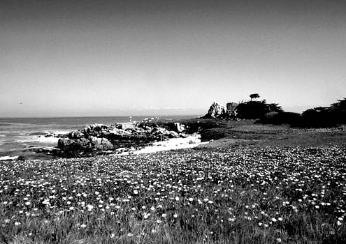 Joyce Dickens - Hopkins Marine Station B and W