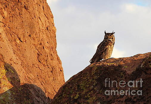 Horned Owl Perched At Sunset by Natalie Ortiz