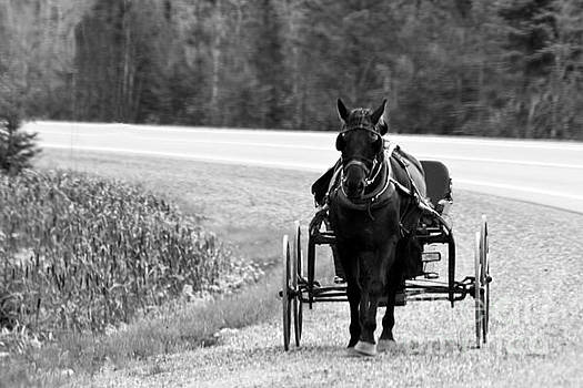 Horse and Buggy by Marjorie Imbeau