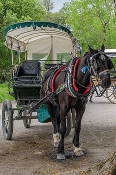 Horse and Cart in Kerry by Martina Fagan