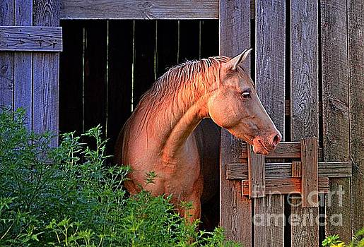 Horse Barn by Debbie Portwood