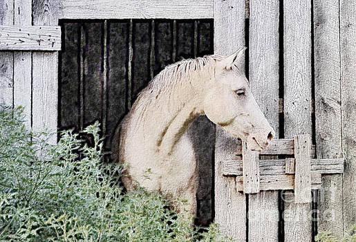 Horse Barn - Digital Paint 1 by Debbie Portwood