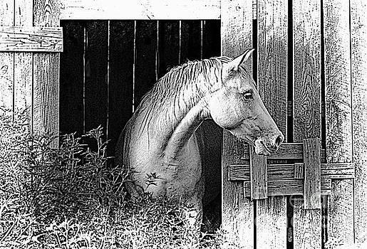 Horse Barn - Digital Sketch effect by Debbie Portwood