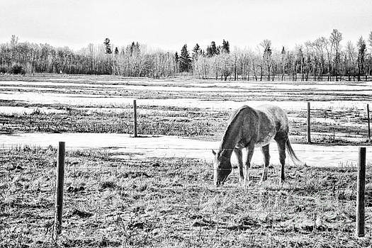 Horse Behind the Fence by Lori Frostad